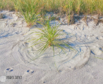 circles-in-the-sand_16207895732_o